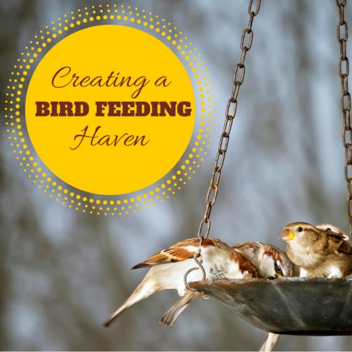 Creating a Bird-Feeding Haven | Green Acorns